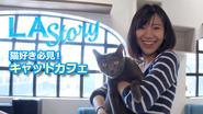 LA Story : 猫好き必見!キャットカフェ