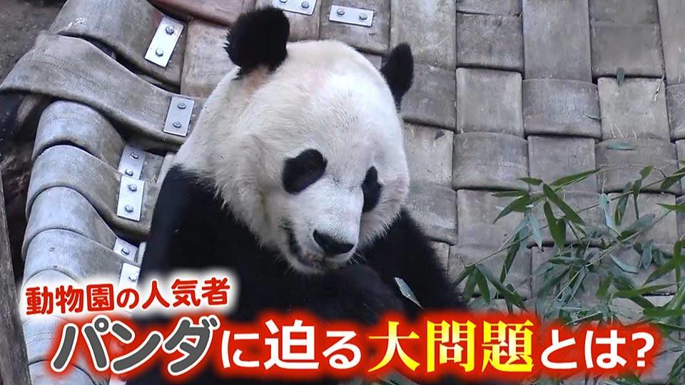 動物園の人気者に忍び寄る国際情勢とは?