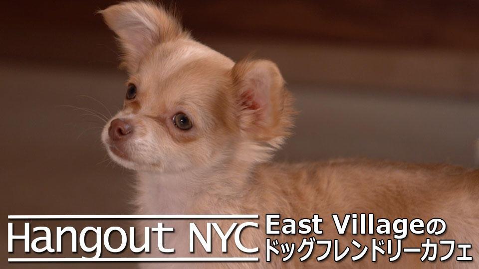 Hangout NYC : ドッグフレンドリーカフェ / Dog Friendly Café