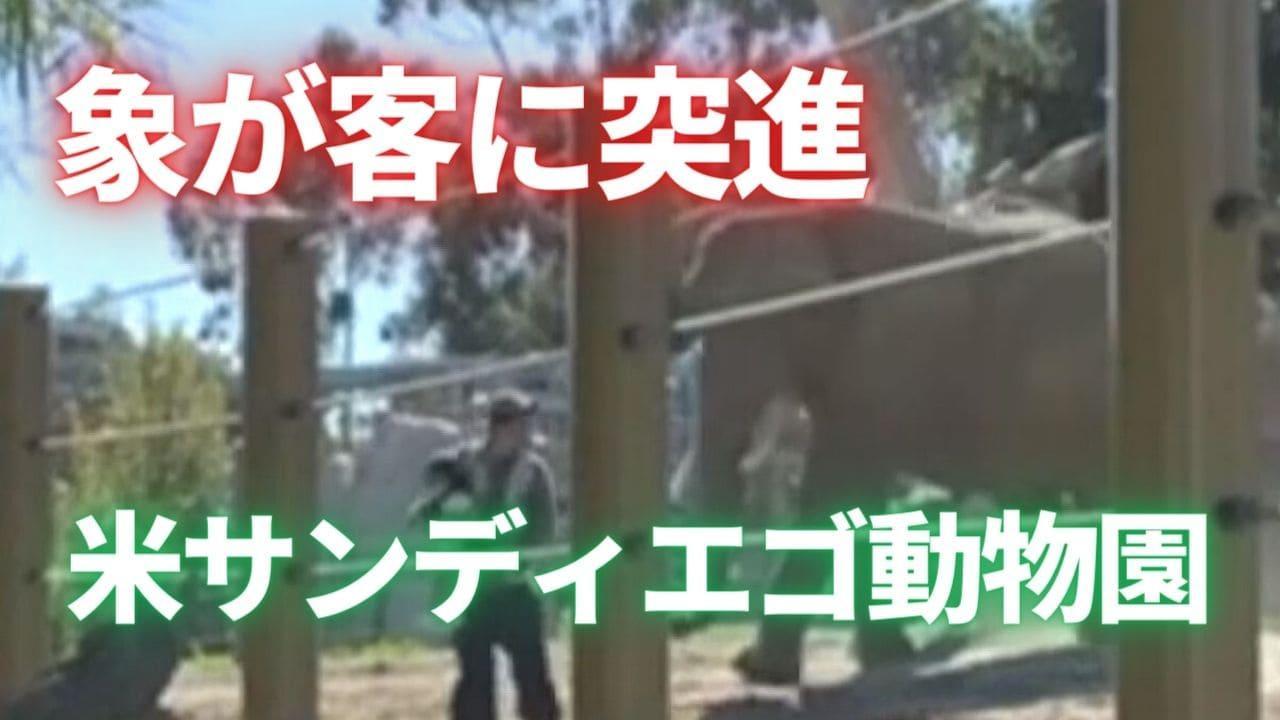 カリフォルニア州 サンディエゴ動物園の象が客に突進