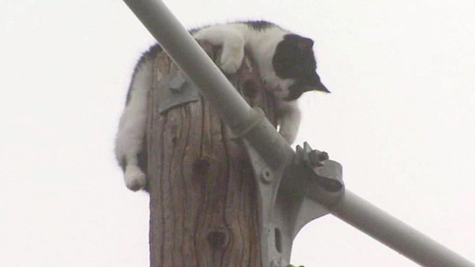 お騒がせ猫の救出劇 「てっぺんのあの子を救え!」