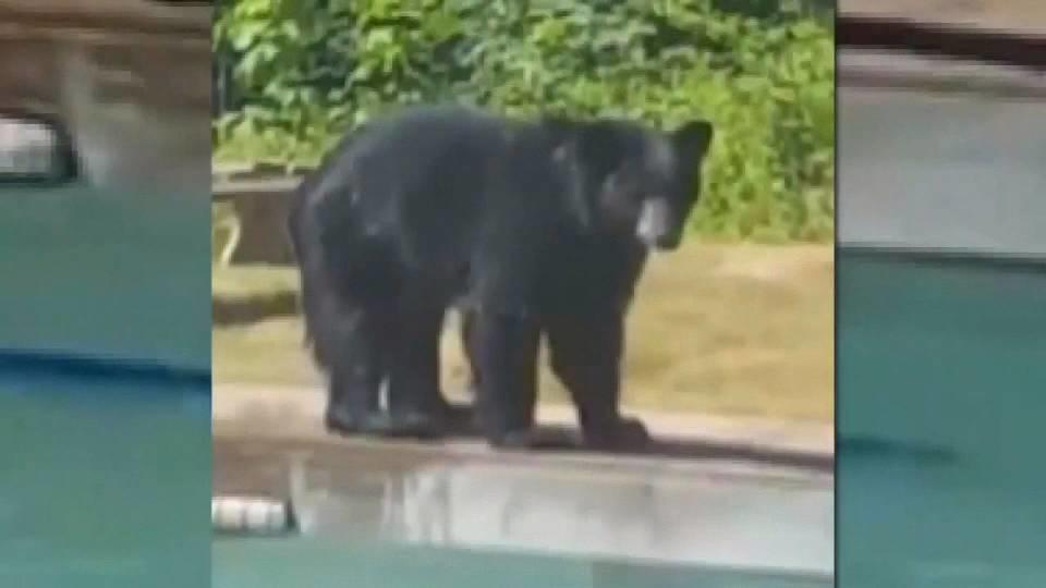 クマだって水遊びしたい!