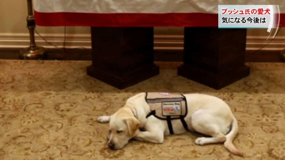忠犬サリー 新たなミッションへ / Sully the dog