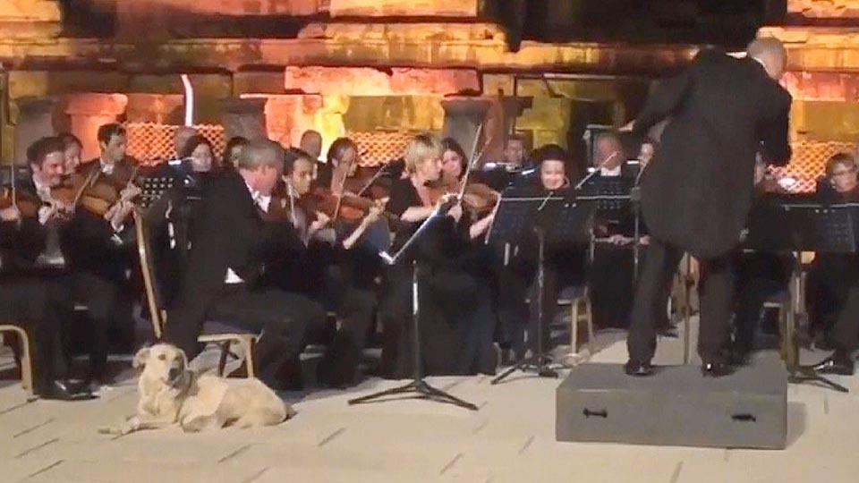 クラシック大好き犬 コンサートに乱入
