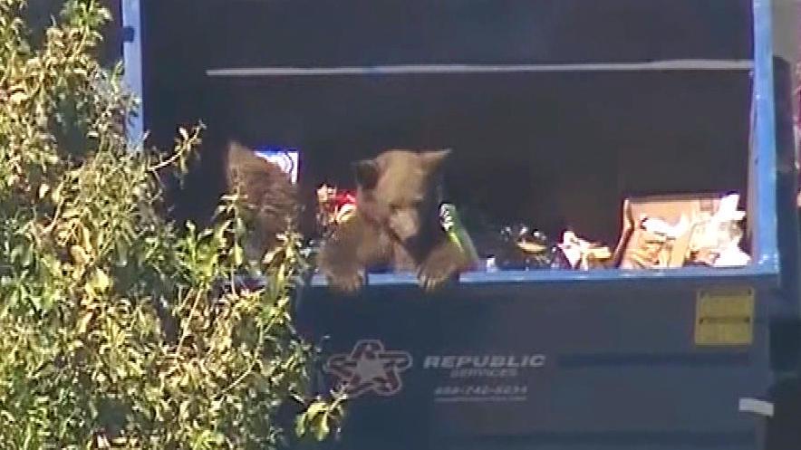 カリフォルニアの住宅地にクマの親子出現!