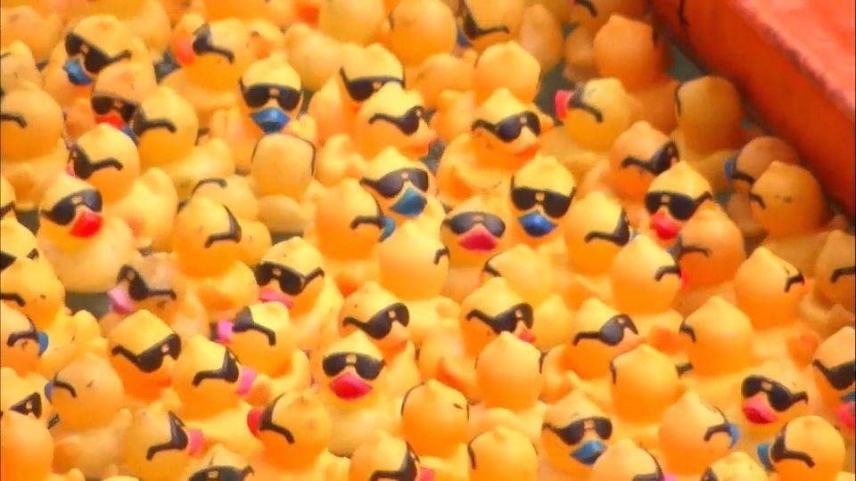 シカゴの川でアヒル6万羽の競泳?