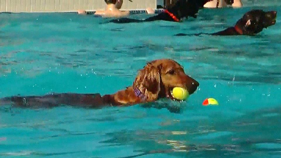 夏の終わりにわんこもプール / puppy pool party