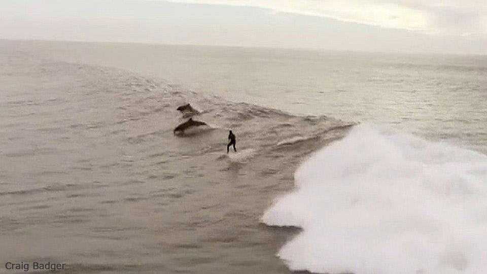 イルカと夢の競演! / Dolphins follow surfer