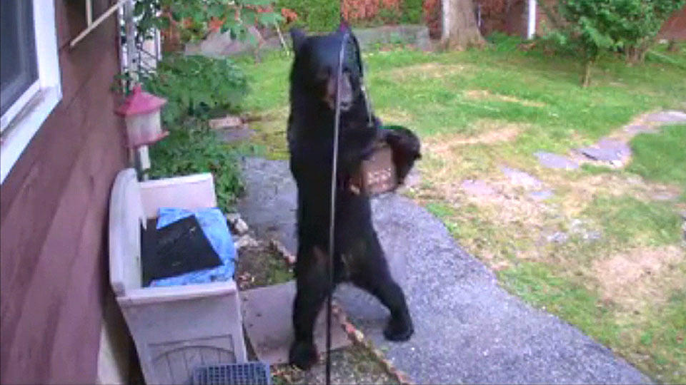 犬が熊を撃退!