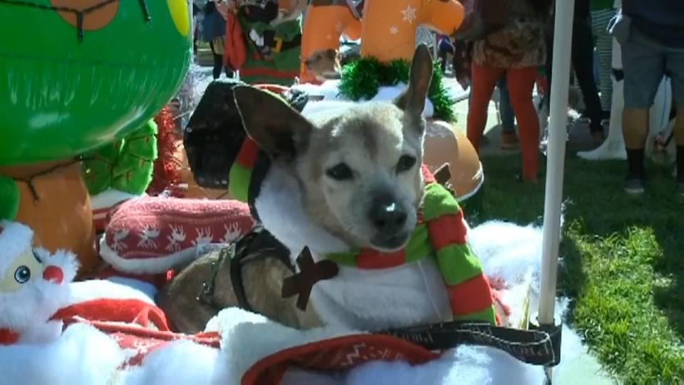 ペットのホリデーパレード! / Pets parade for holiday