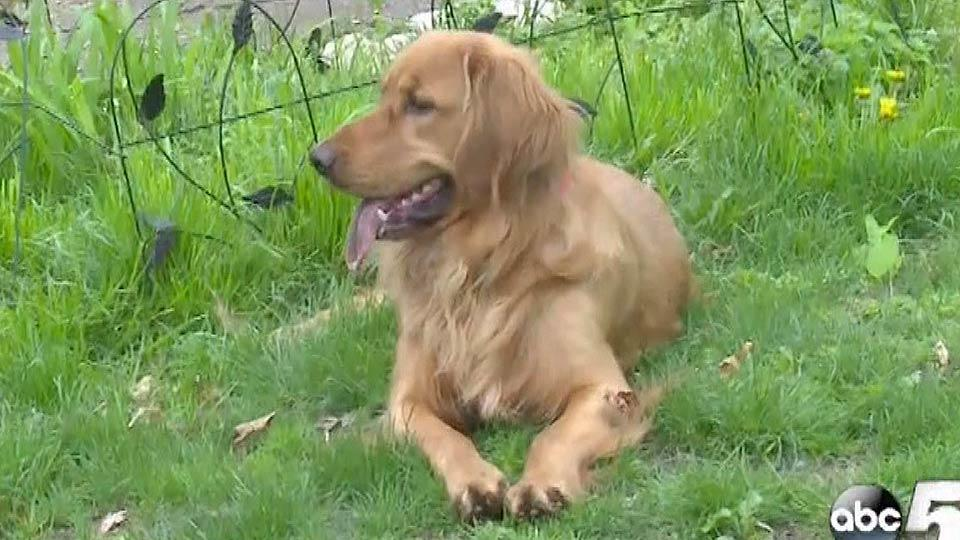 穴掘り犬が見つけたすごいモノ
