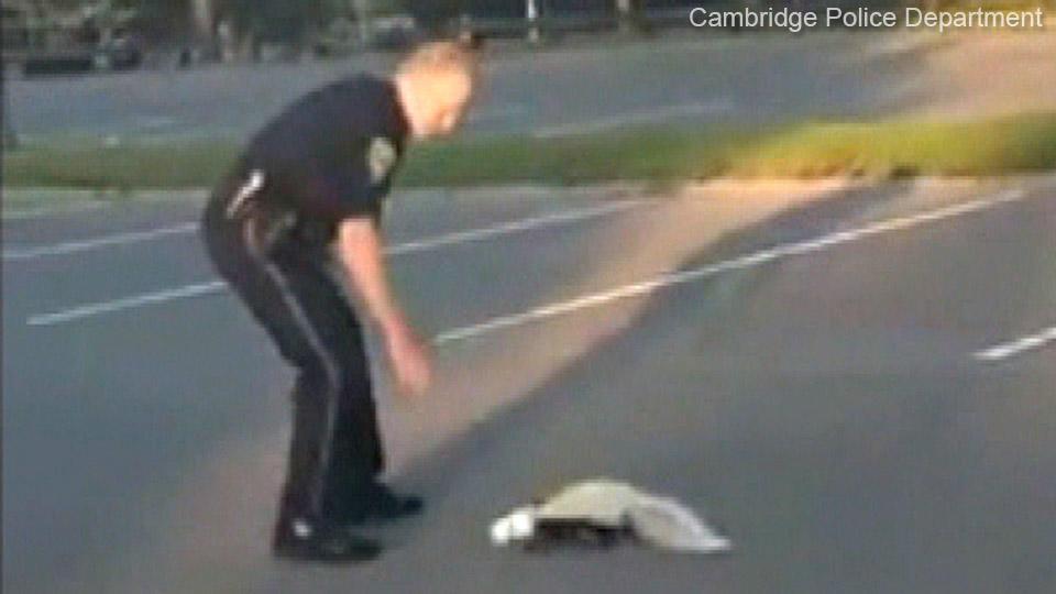 警官、決死のスカンク救出
