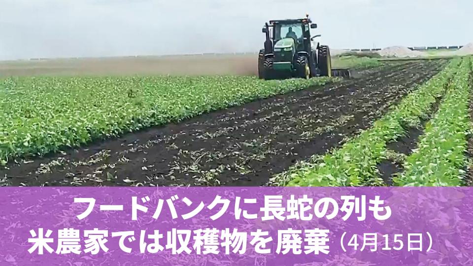 4月15日 フードバンクに長蛇の列も、米農家では収穫物を廃棄