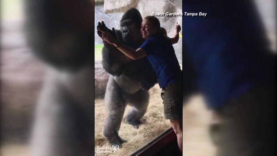 まねっこゴリラにちょい萌え / Mimicking gorilla