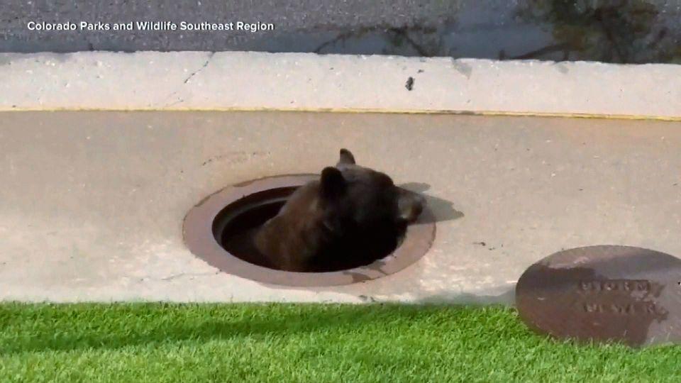 お茶目などうぶつ2本立て! / Manhole bear & Clinging lion