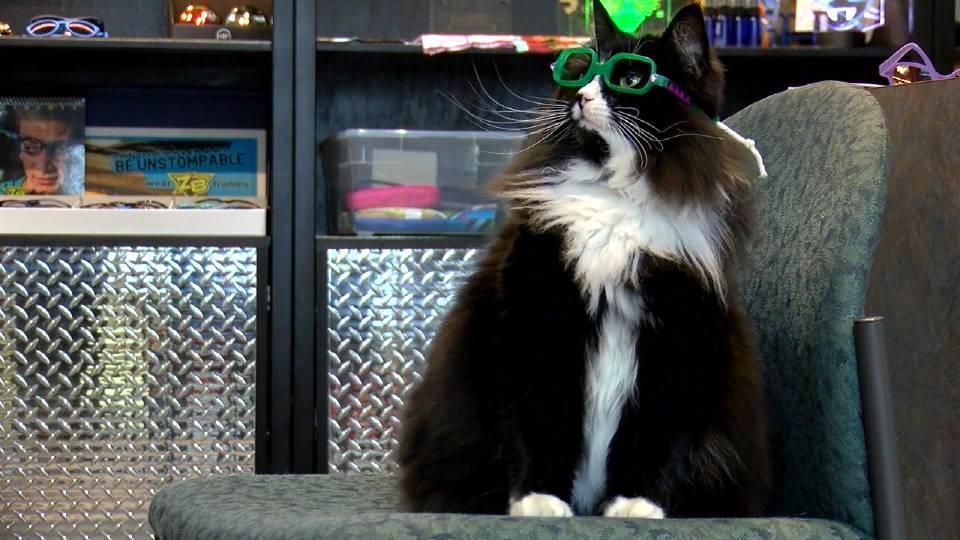 猫のメガネ教室
