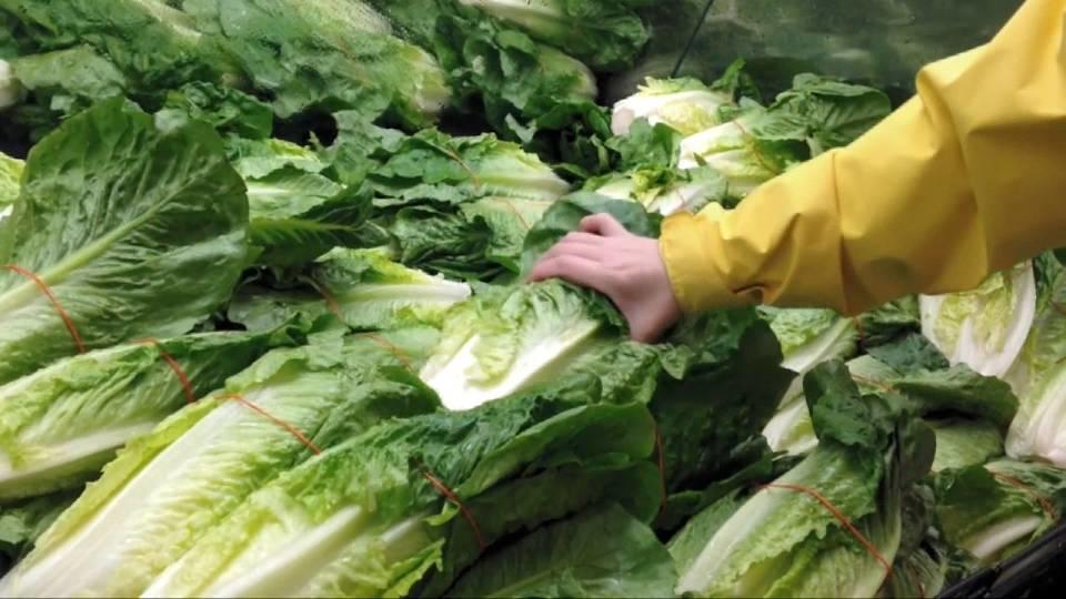 「ロメインレタス食べないで」 O157感染 /romaine lettuce